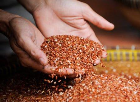 Tìm hiểu các loại ngũ cốc trên thị trường giàu dinh dưỡng nhất hiện nay